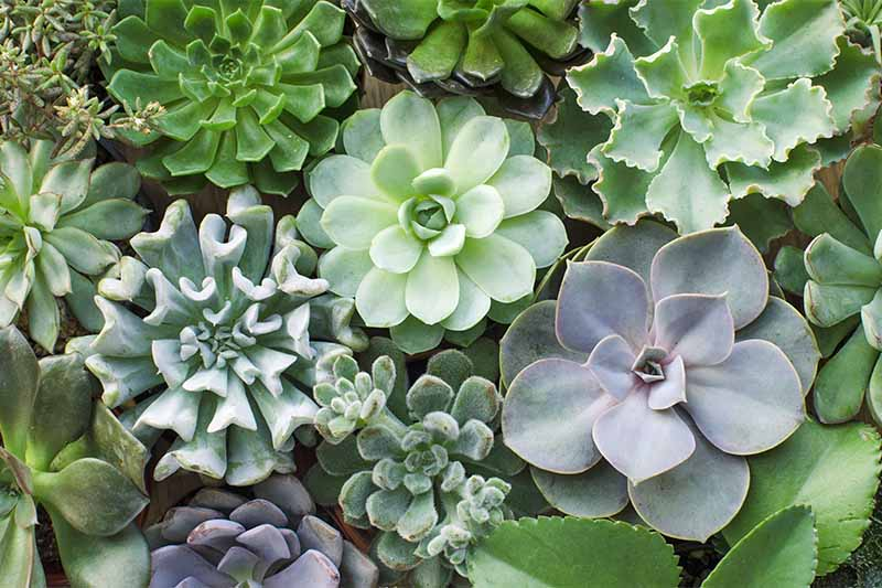 From Where can you Buy the Best Succulents?